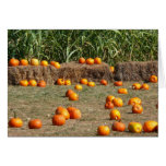 Pumpkins, Corn and Hay Autumn Harvest Photography Card