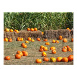 Pumpkins, Corn and Hay Autumn Harvest Photography Photo Print