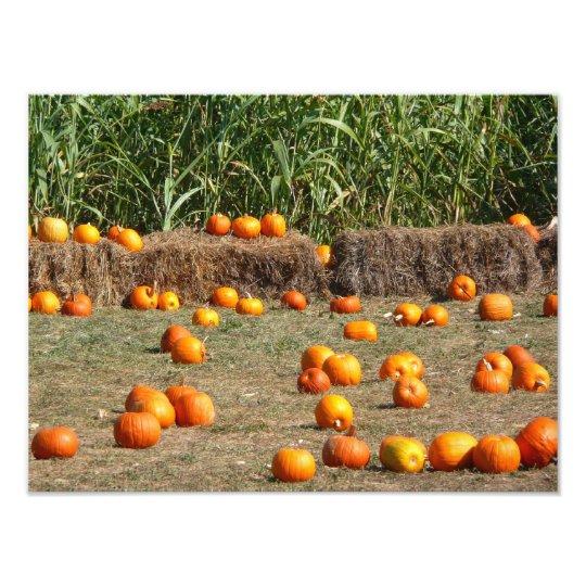 Pumpkins, Corn and Hay Autumn Harvest Photography Photo Print