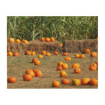 Pumpkins, Corn and Hay Autumn Harvest Photography Wood Wall Art