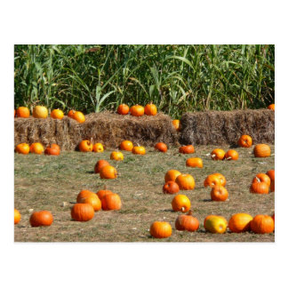 Pumpkins Corn and Hay Autumn Postcard