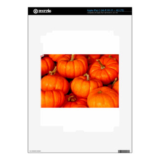 Pumpkins Decal For iPad 3