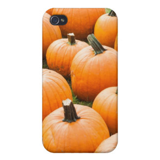 Pumpkins for Sale at a Farmer s Market iPhone 4/4S Covers