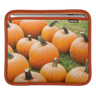 Pumpkins for Sale at a Farmer's Market iPad Sleeve