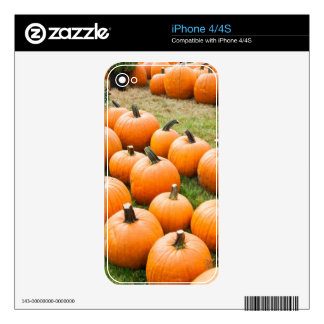 Pumpkins for Sale at a Farmer's Market iPhone 4S Decal