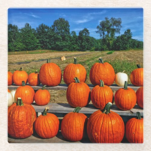 Pumpkins for Sale Glass Coaster