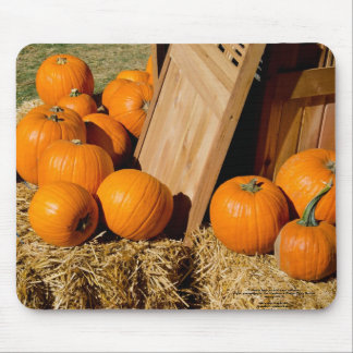 Pumpkins fresh out of the box mouse pad