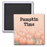 Pumpkins Fridge Magnet
