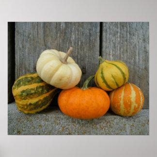 Pumpkins & Gourds | Rustic Barn Wood Poster