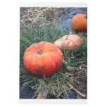 Pumpkins in a Row Metal Photo Print