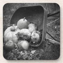 Pumpkins in a Wheelbarrow Old Fashion Coaster