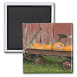 Pumpkins in old wagon magnet