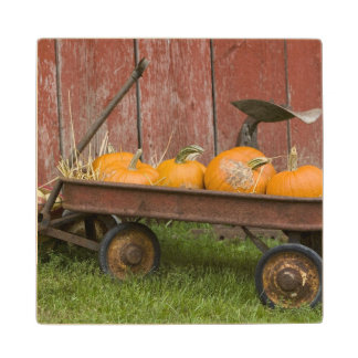 Pumpkins in old wagon maple wood coaster