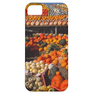 Pumpkins iPhone 5 case