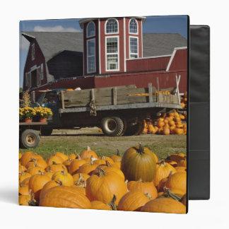 Pumpkins on farm in autumn near Concord, 2 Binder