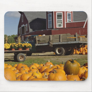 Pumpkins on farm in autumn near Concord, 2 Mouse Pad