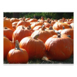 Pumpkins Photo for Fall, Halloween or Thanksgiving