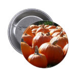 Pumpkins Photo for Fall, Halloween or Thanksgiving Button