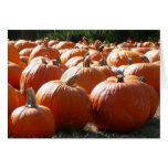 Pumpkins Photo for Fall, Halloween or Thanksgiving Card
