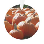 Pumpkins Photo for Fall, Halloween or Thanksgiving Ornament