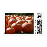 Pumpkins Photo for Fall, Halloween or Thanksgiving Postage