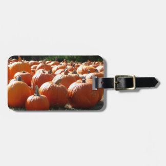 Pumpkins Photo for Fall, Halloween or Thanksgiving Tags For Luggage