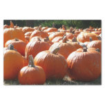 Pumpkins Photo for Fall, Halloween or Thanksgiving Tissue Paper