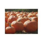 Pumpkins Photo for Fall, Halloween or Thanksgiving Wood Poster