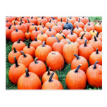 Pumpkins Post Cards