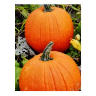 Pumpkins Postcards