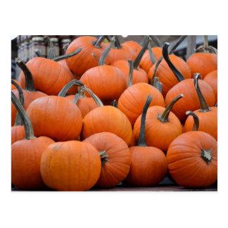 Pumpkins Pumpkins and More Pumpkins Fall Postcards
