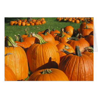 Pumpkins Roca Berry Farm card  4