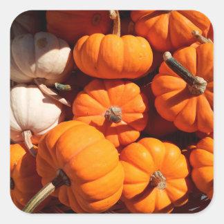 Pumpkins Square Stickers