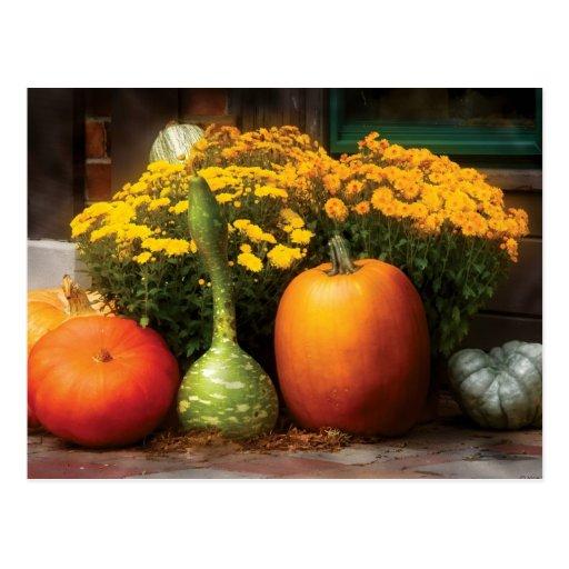 Pumpkins -  The Gang's all here Postcard