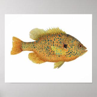 Pumpkinseed Sunfish Art Poster