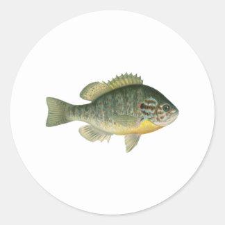 Pumpkinseed Sunfish Logo Classic Round Sticker