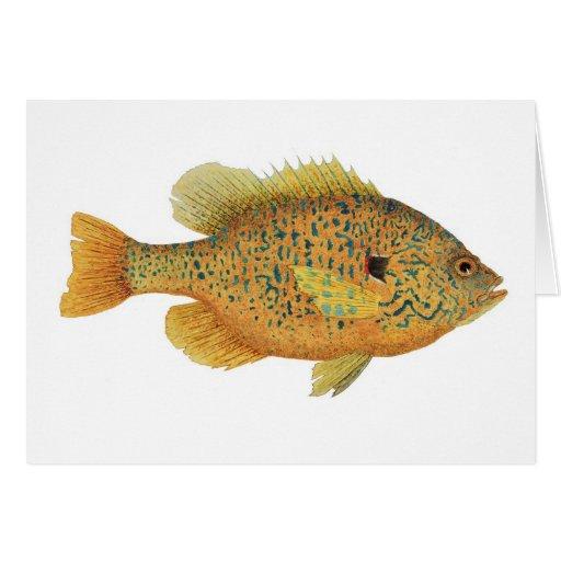 Pumpkinseed Sunfish Watercolor Card