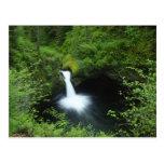 Punchbowl cae en Eagle Creek, el río Columbia Tarjeta Postal