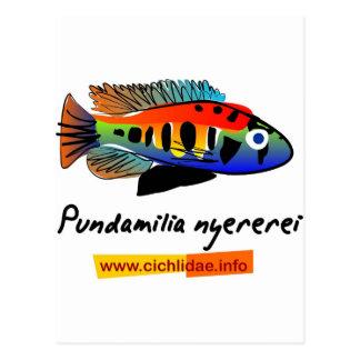 Pundamilia nyererei postcard
