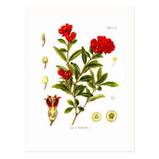 Punica granata (pomegranate) post card