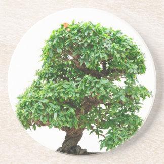 Punica Granatum bonsai tree Drink Coasters