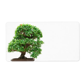 Punica Granatum bonsai tree Label