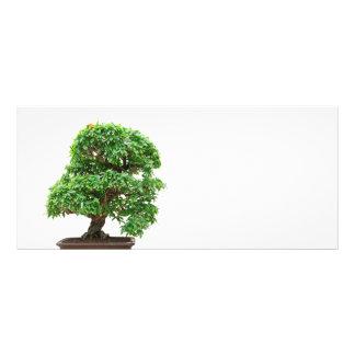 Punica Granatum bonsai tree Rack Card