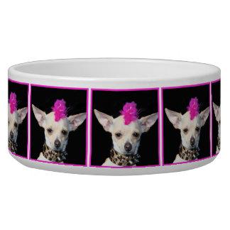 Punk Rock Chihuahua dog bowl