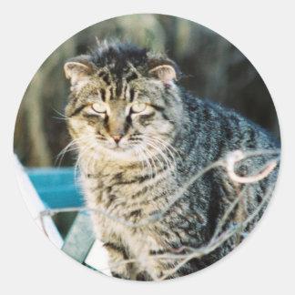 Punk Rock Feral Tom Cat Classic Round Sticker