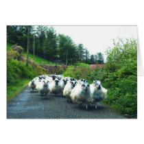 Punk Sheep on the Beara Peninsula Ireland