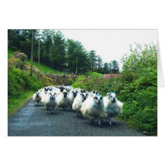 Punk Sheep on the Beara Peninsula Ireland Greeting Card
