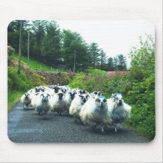 Punk Sheep on the Beara Peninsula Ireland Mouse Pad
