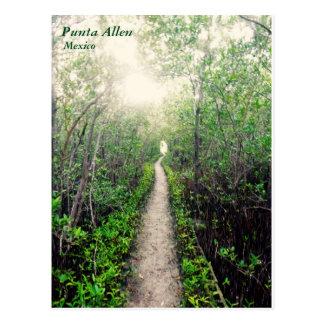 Punta Allen Beach Path Postcard