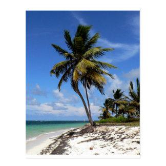 Punta Cana, Dominican Republic, coconut palm tree Postcard